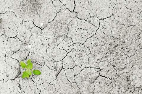 Cracked Ground with Plant
