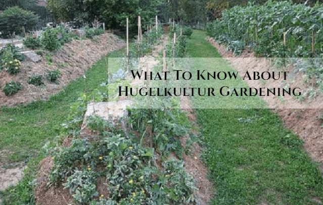 What To Know About Hugelkultur Gardening