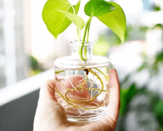 Unique Plants You Can Grow In Water