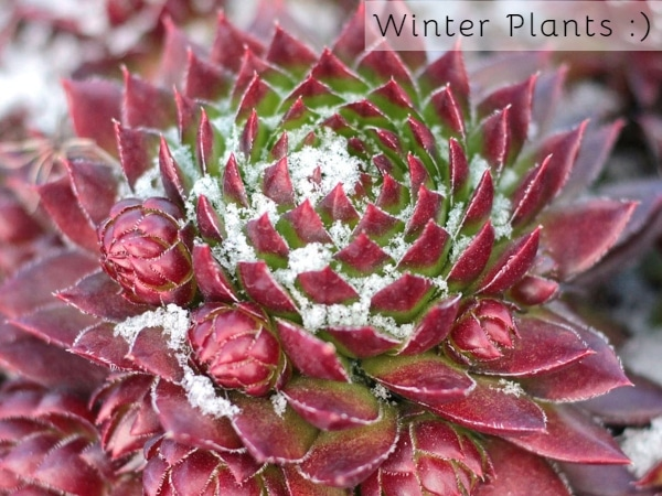 Easiest Plants To Take Care Of During Winter