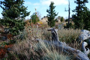 Denver Botanic Gardens - Mordecai Children's Garden; Photo by Michael Guidi