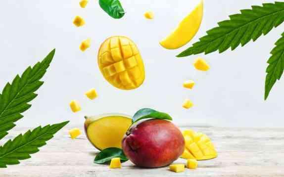 Resultado de imagen para mango cannabis