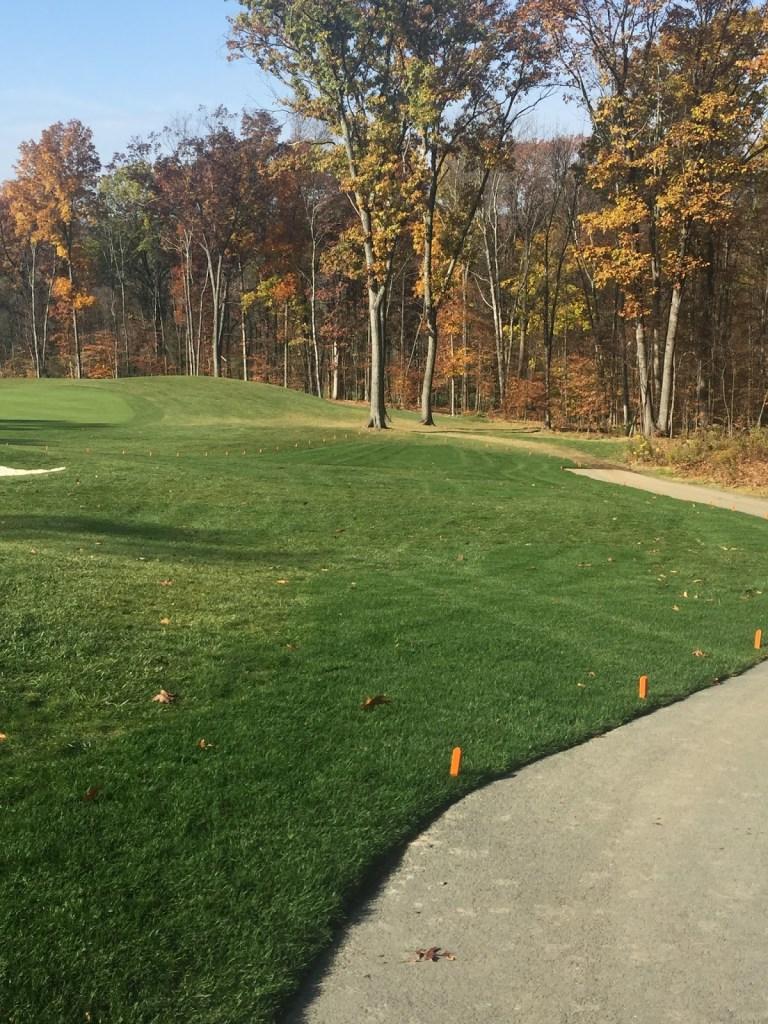 Turf improvements #5 along path