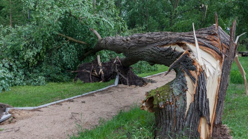 Greensboro residents can request tree damage clean-up assistance through the city
