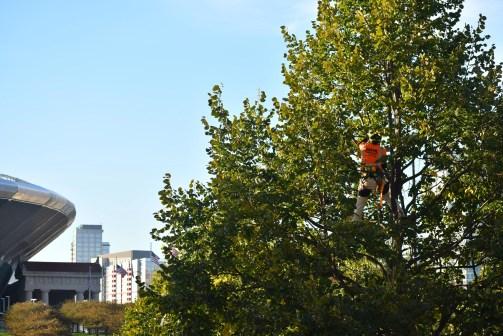 green-scene-tree-service-17