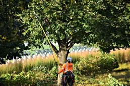 green-scene-tree-service-2