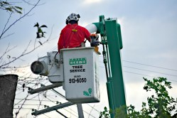 green-scene-tree-service-5