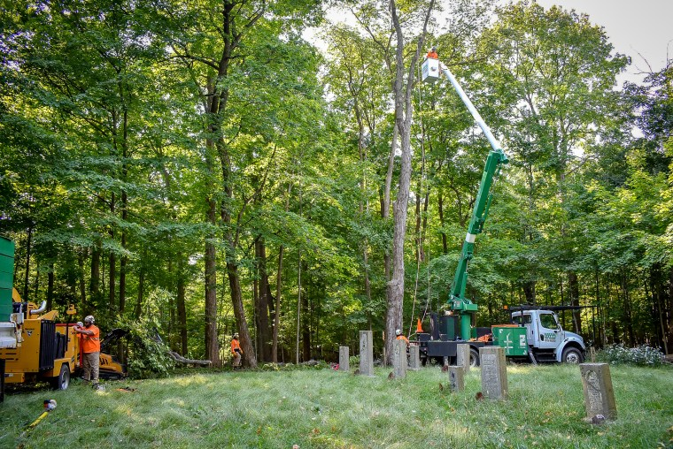 green-scene-saluting-branches-10
