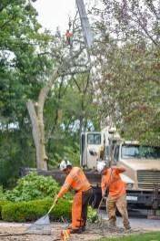 green-scene-tree-service-16