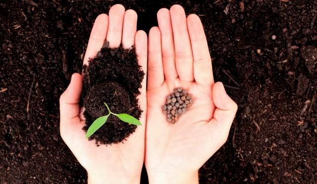 Подготовка семян к посеву индивидуальный подход