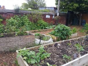 Raised Beds at Serenity Community Garden