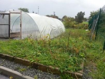 Callan Community Garden - winter 2012/2013