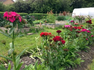 Leighlin Parish Community Garden
