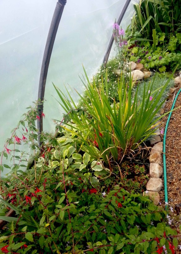 Doesn't Just Have to Be About Vegetables - Organic Ornamentals in a Polytunnel
