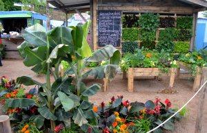 GOAL garden at Bloom