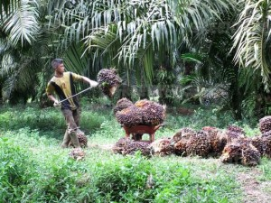The Truth About Palm Oil