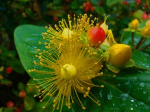 How to Learn Botanical Latin Plant Names