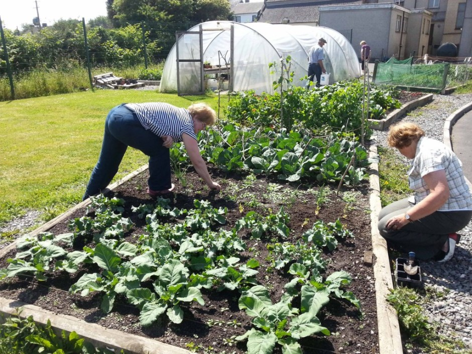 Caring for plants grown by students