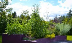 Medicinal Herb Bed