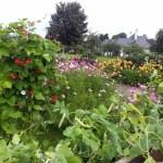 Summer 2012 Leighlin Parish Community Garden
