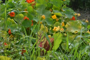 5 Reasons Why You Should Find a Community Garden