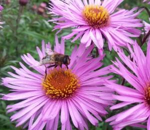 Planting calendar for honey bees