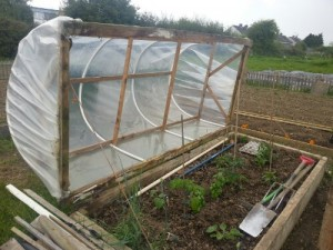 Start Up Essentials for a Community Garden |Greenside Up