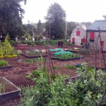 clonegal community garden