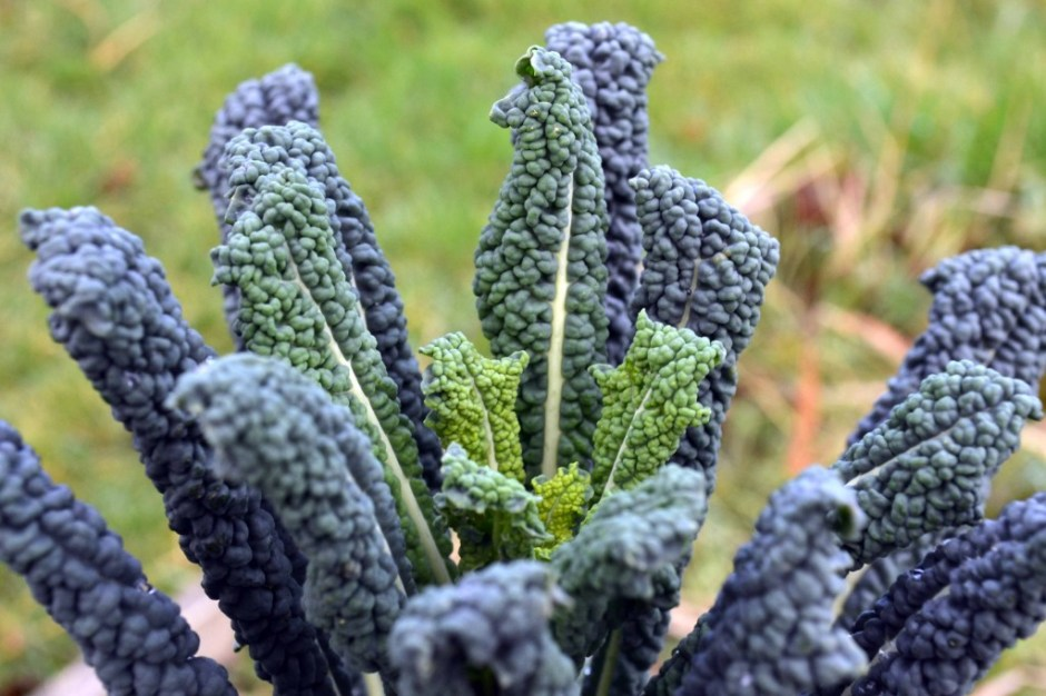 Grow Your Own Kale