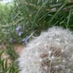 16 Alternatives to using Herbicides
