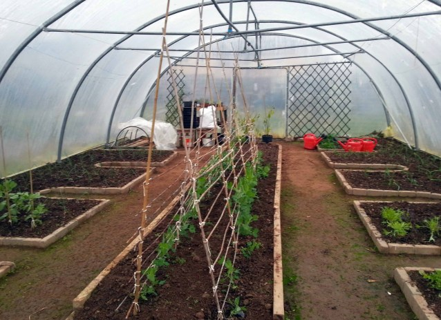 Polytunnel Layout in a Community Garden