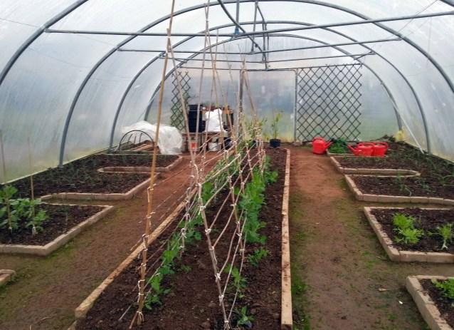 Polytunnel Layout in a Community Garden