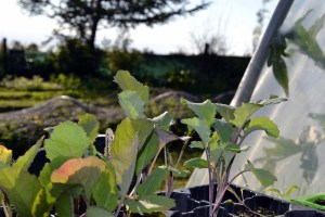 Seeds : How do you know when it's safe to sow?