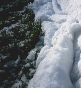 Keep a Diary - Polytunnel snow 28 February 2014