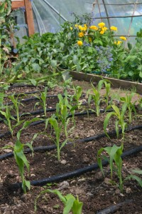 Start Up Essentials for Community Gardens | Greenside Up