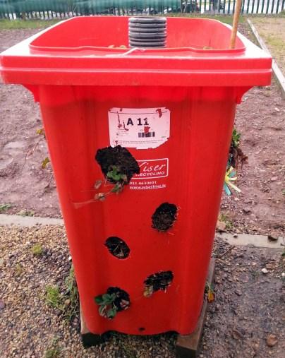 Strawberry Planter 'best strawberries in town'