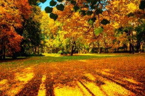 """Photograph of sunlight streaming through autumn leaves, from """"Red Light Therapy: Legit or Hype?"""" at Green Smoothie Girl."""