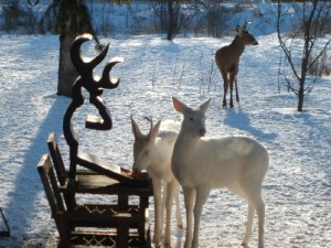 We herd cats during round-up, and in the off season we breed albino deer.