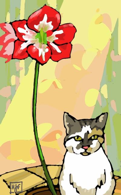 Tom's amaryllis with Sheewash the cat
