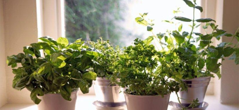 indoor-organic-garden5