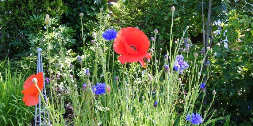 Flower garden for every season