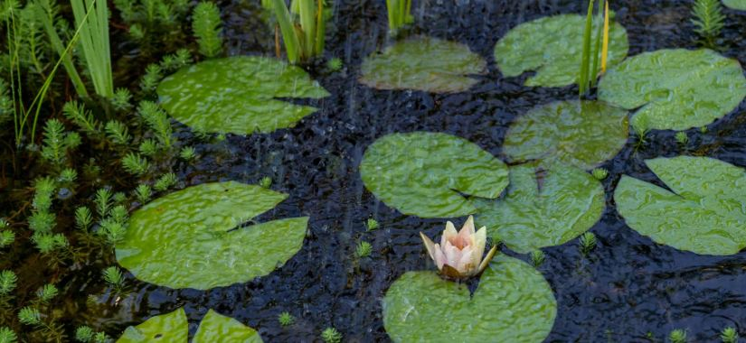 Handy Tips to Help You Avoid a Waterlogged Garden