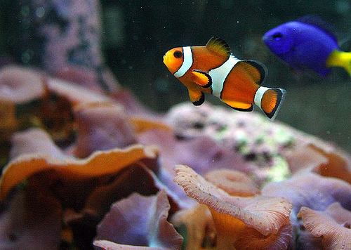 What's the Difference Between SaltWater Tank and Fresh Water Tank ?