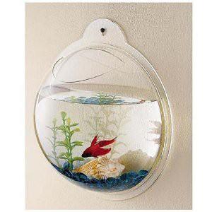 Wall mount fish bowl