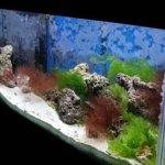 Aquarium & Fish Care Tips
