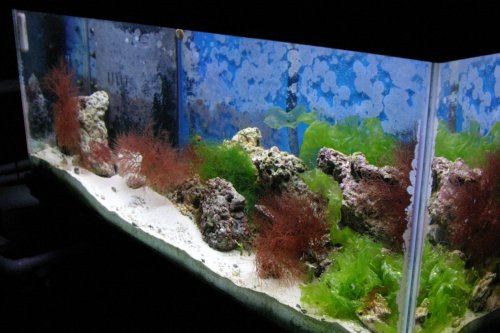 Aquarium & Fish Care Tips