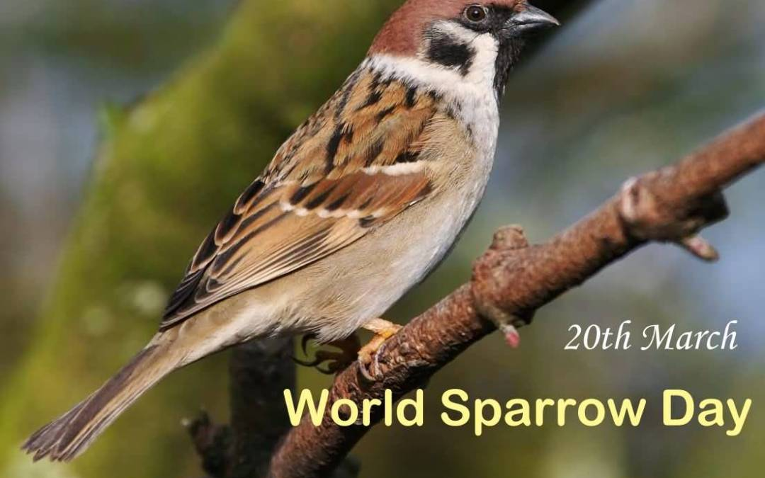 World Sparrow Day 2019: Why is It Necessary to Celebrate it?