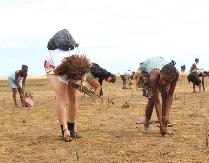 Brain Youth Group Spurs Mangrove rehabilitation: Mombasa County, Kenya