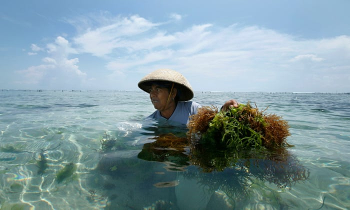 Seaweed in Food Packaging is Indonesia's Alternative to Plastic Pollution