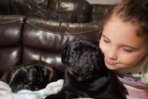 child with 2 black pugs